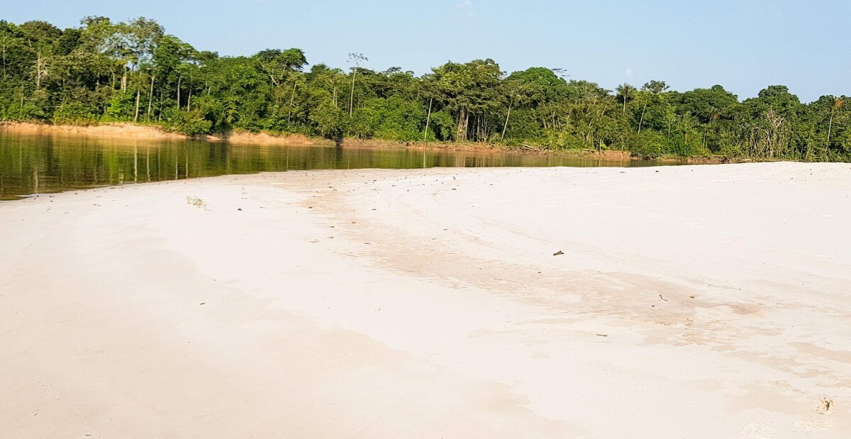 Reserva Allpahuayo Mishana cautiva con su arena blanca y bosques inundables.