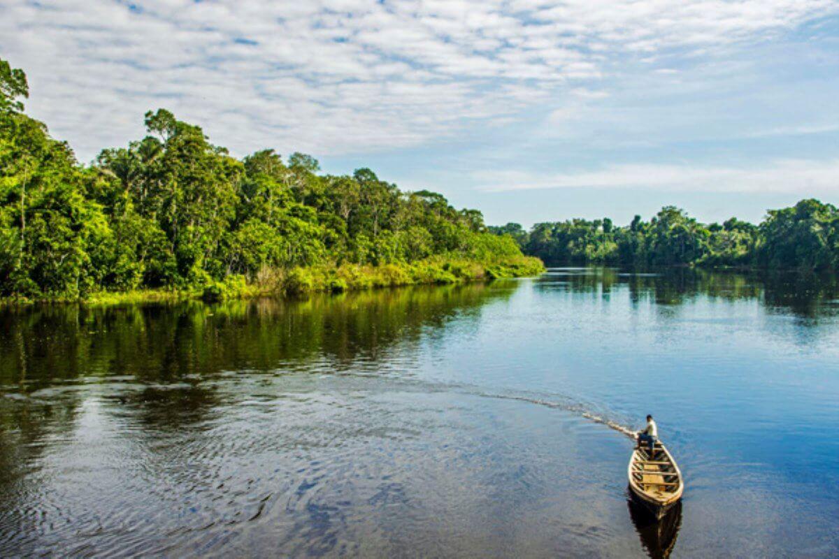 Reserva Allpahuayo Mishana cautiva con su arena blanca y bosques inundables